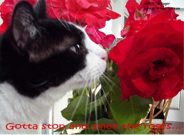 Gotta stop and smell the roses along the way!