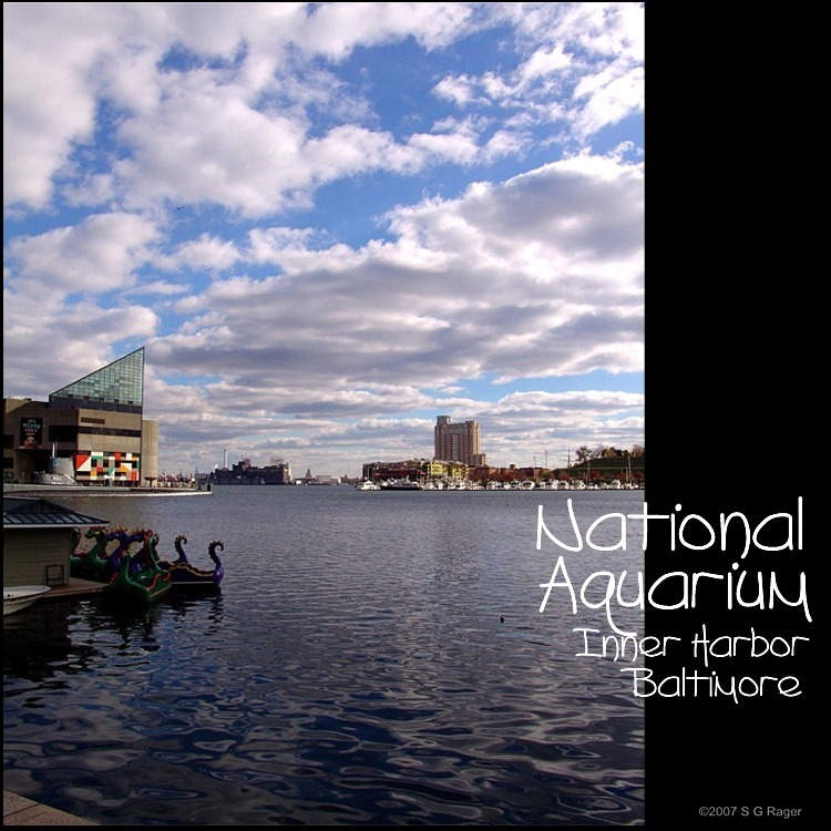 Baltimore: Inner Harbor, National Aquarium